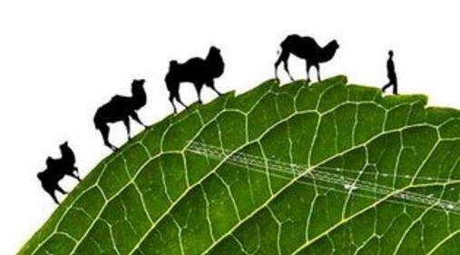 Image Greening BRI